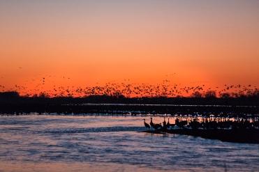 Cranes on the Platte River at dusk.