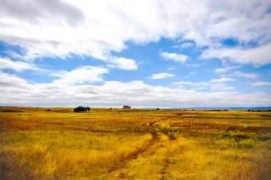 Grassland near Montrose, Nebraska