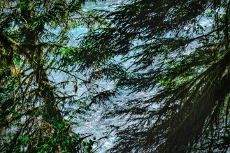 Ho river through the trees in the Ho Rain Forest, Olympic National Park.