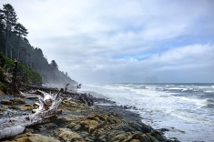 Kalaloch beach on the Olympic Peninsula coast.