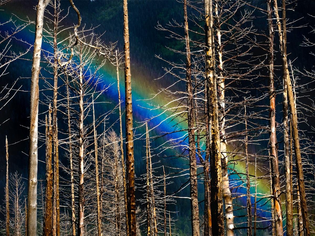 Rainbow behind burned timbers