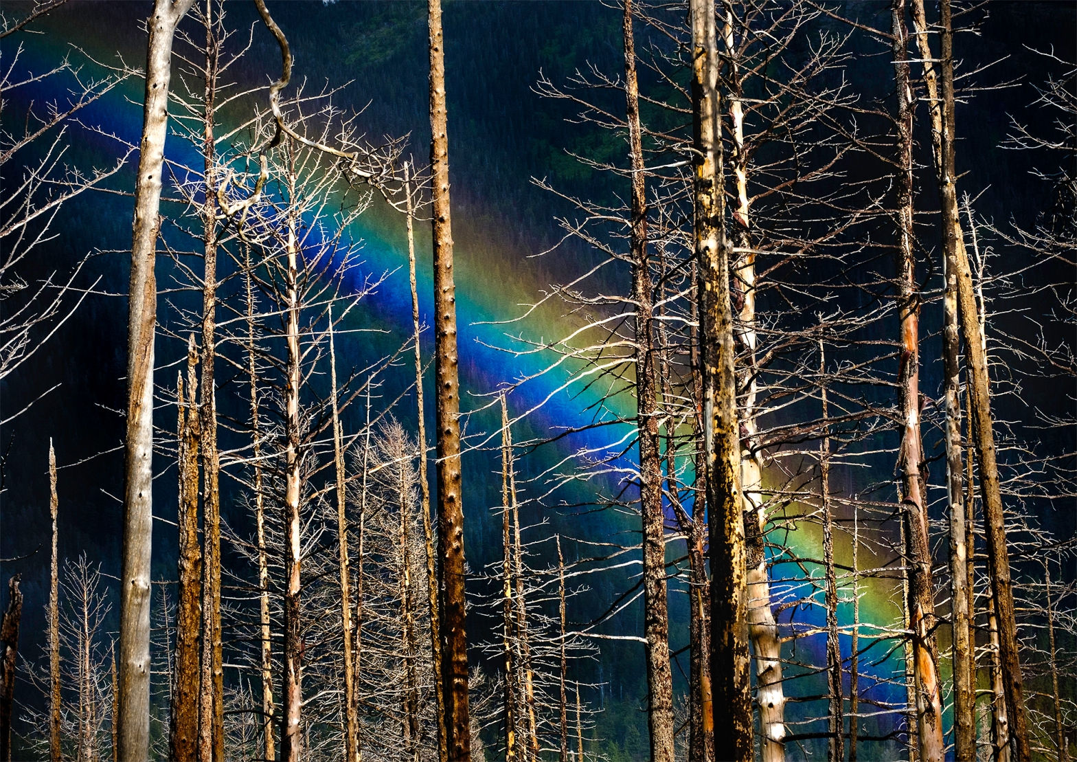 Rainbow behind burned timbers