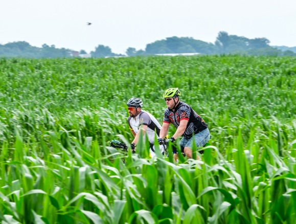 Cyclists wind along County Road 15 bordered by cornfields on the annual bike ride from Bennington to the fair Sunday morning.