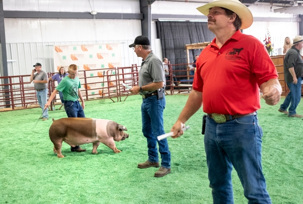 Front to back: Gary Lambrecht and Matt Mathiesen take bids while Brody Wilkins shows his hog during the Wahington County Fair livestock auction Wednesday.