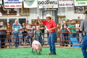 Charley Hoier shows her market hog for resale as Gary Lambrecht takes bids.