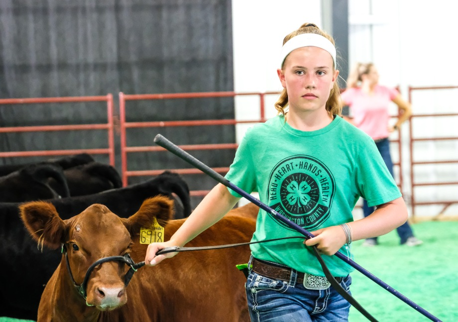 Ellie Ortmeier competes in the Beef Show competition at the Washington County Fair Monday.