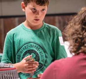 Sawyer Tjardes shows his companion gecko, Radar, at the Cat and companion animal show on Tuesday. WC Fair Tuesday
