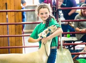 Hanna Gross shows her market sheep at the WCF Livestock Auction.