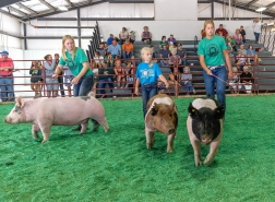 From left, Alexis Warner, Charile Hoier, and Kate Hoefker show their division champion hogs in the Market Hog in the final Grand Champion competition. WC Fair Tuesday