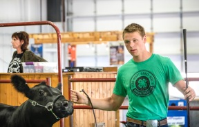 Luke Mathiesen shows commercial heifer in the Beef Show Monday.