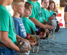 4-H Competitors competitors await the judges evaluation during the Standard Hen competition Saturday.