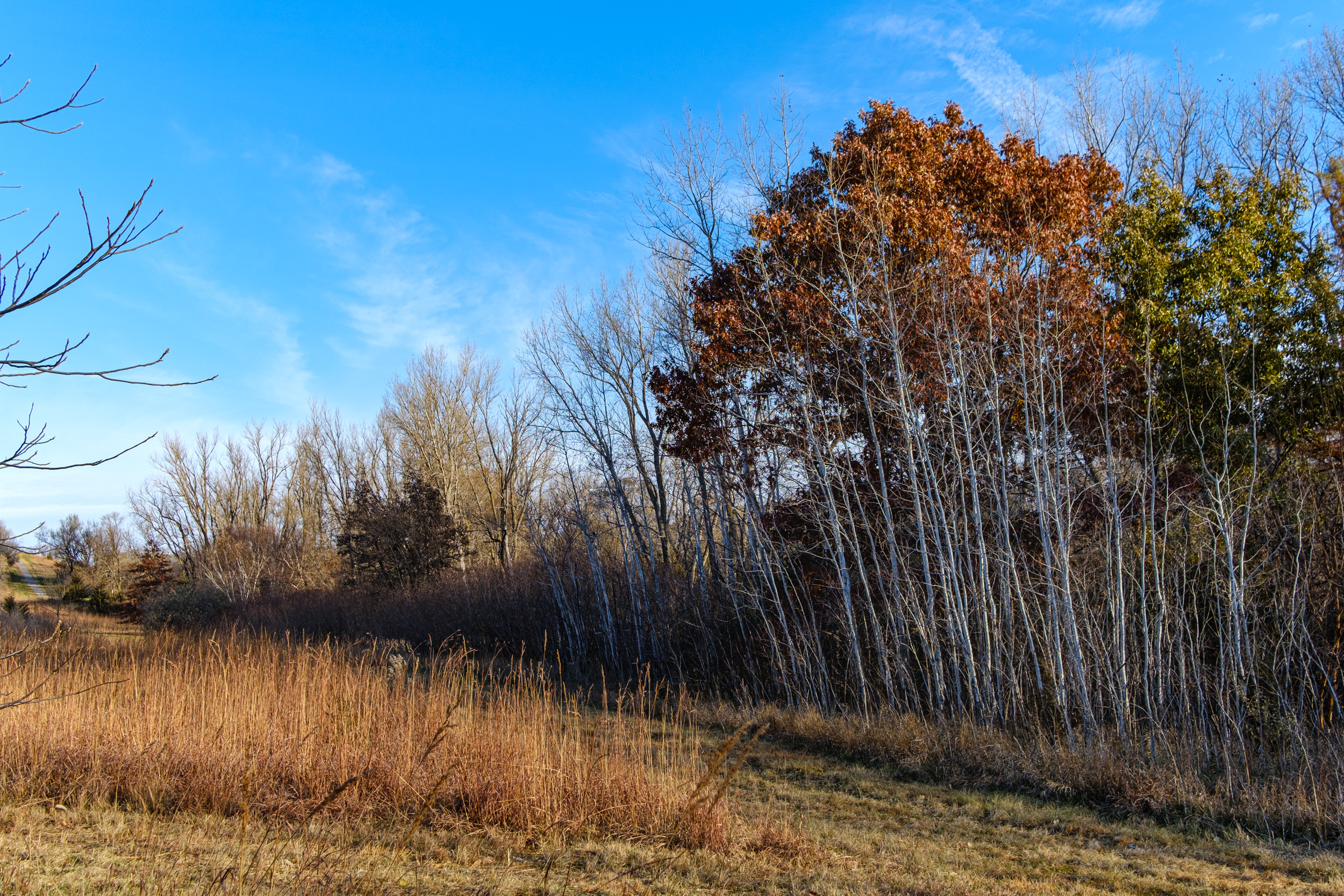 Trees and grasses along trail