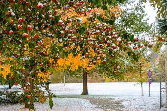 Snow on trees along Lions Park trail at Arbor Park.
