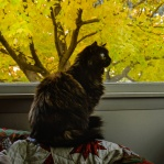 Roz watches birds at feeder through my living room window.