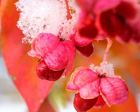 _Stemmerman park flowers-1