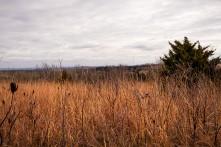 Tall grass and cedar trees along ridge at Black Elk Neihardt.