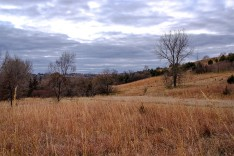 Tall grass and trees along ridge at Black Elk-Neihardt Park