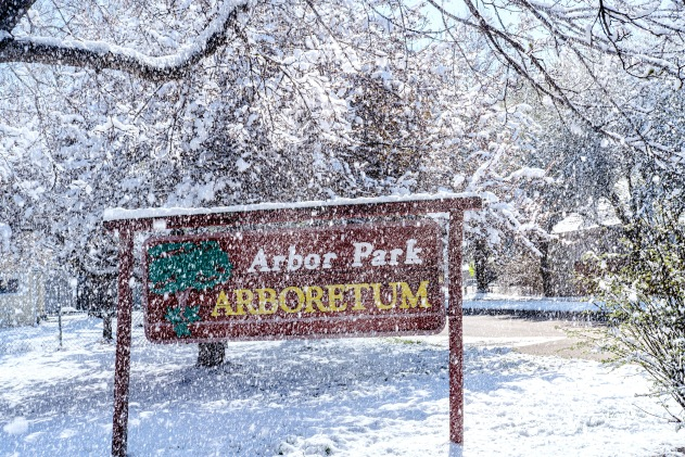 Light snow falls from trees surrounding the Arbor Park Arboretum sign at Arbor Park School Friday morning.