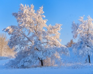 Early morning light on frost covered trees at Black Elk-Neihardt Park
