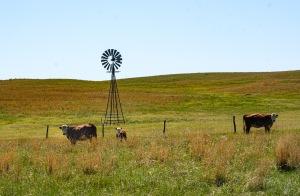 Sandhills ranch landscape