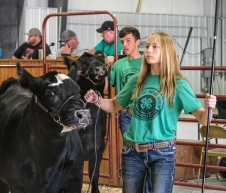 In front, Brooke Hilgenkamp and Lawson Oerman show Simmental Breeding Heifers.