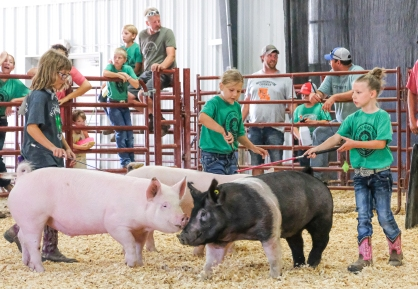 From left Alison Larsen, Jenica Heaton and Hadley Grabbe run their pigs during Clover Kids Class exhibition.