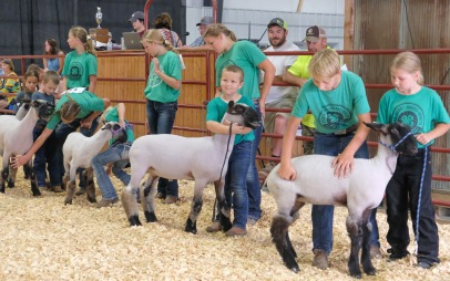 Veteran 4Hers help Clover Kids ages 5 to 7 flern how to show their lambs.