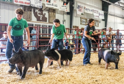 Left to right, Cole Booth, Ella Booth, and Myle Sheets compete in Senior Hog Showmanship competition