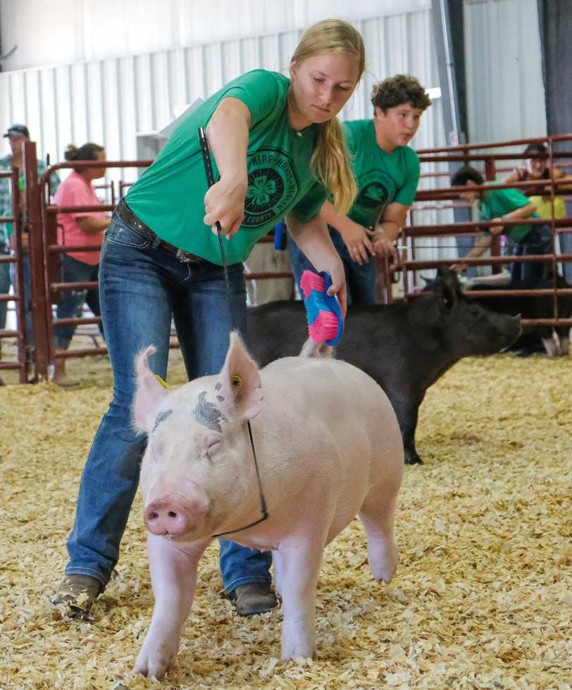 Hannah Mackie and Cole Booth run their pigs in Senior Showmanship competition Tuesday.