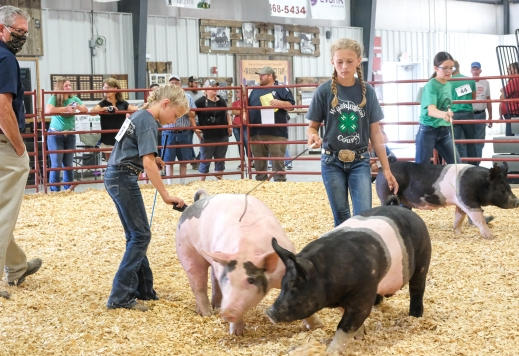 Judge Gary Kubicek watches as Charley andLaney Hoir and Ruby Booth compete in Intermediate Showmanship competition Tuesday.