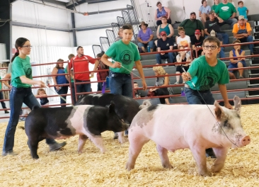 From left Ruby Booth, Mason Stoddard and Hayden Hegemann show pigs in Intermediate Showmanship competition.