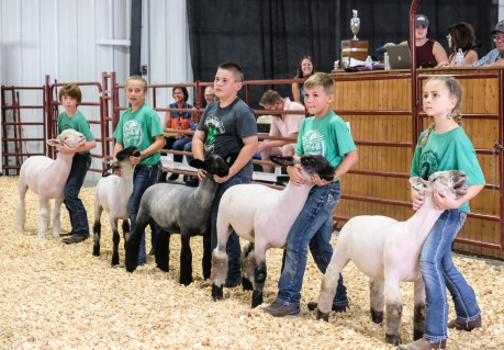 From left Everett Jensen, Ainsley Wolf, Gabriel Vaughan, Eli Hegemann and Melanie Korth compete in Junior Showmanship competition at the Sheep show Sunday.