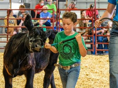 Leah Wurtz shows a calf in the Clover Kid Division.