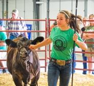 Libby Hegemann shows her Simmental heifer