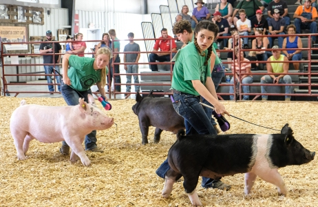 From left Hanah Mackey, Cole Booth and Ella Booth show pigs in Senior Showmanship completion Tuesday.