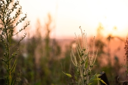 Textured grasses along trail near sunset.