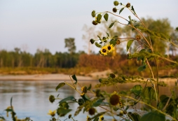 Sunflowers meet the river at the northern end of the trail.