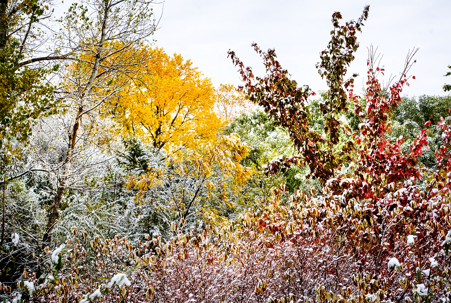 October snow at Black Elk-Neihardt Park